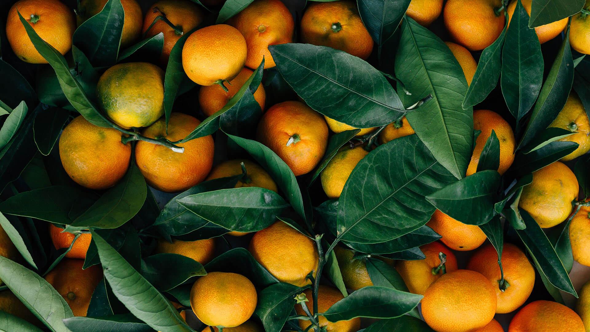 Apelsiner Cityfrukt